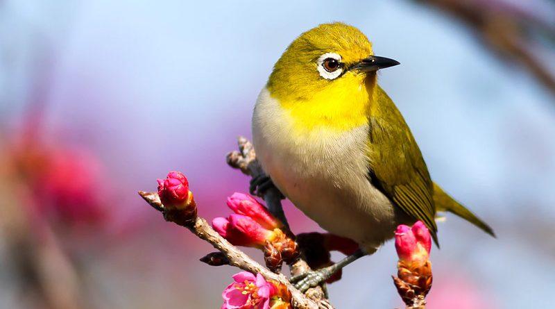 vogels-in-tuin